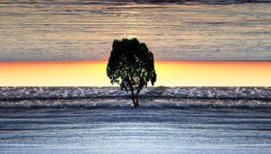 a tree beach